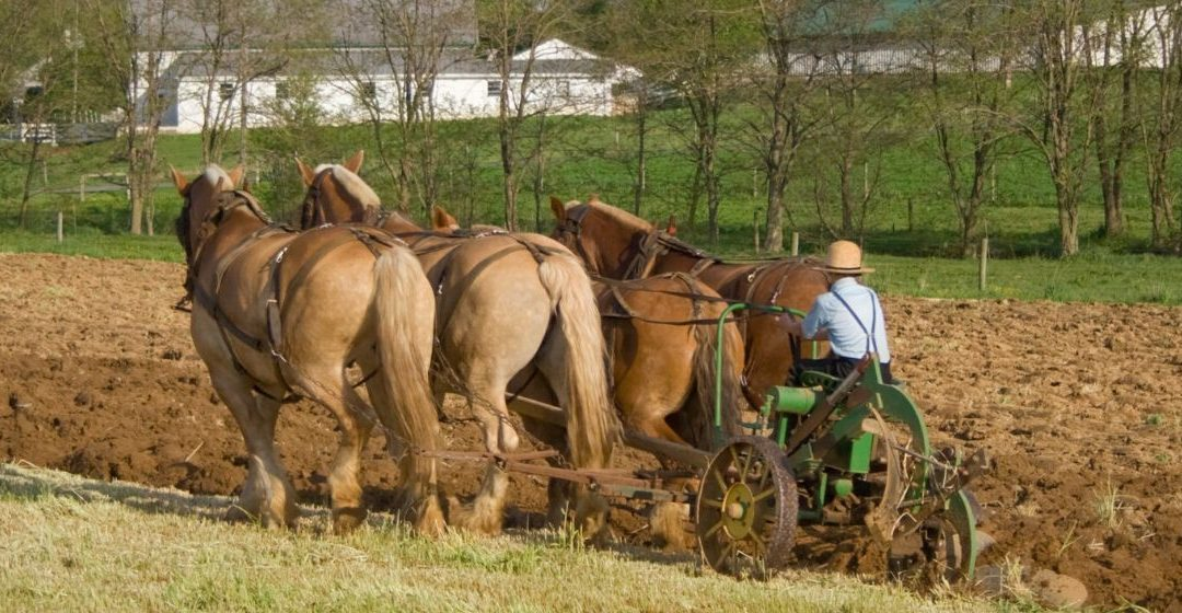 4 Popular Myths About The Amish That Every American Should Stop Believing